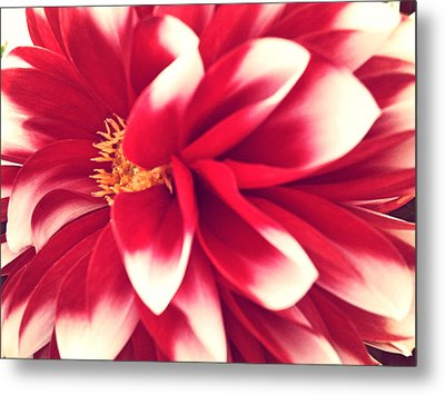 Red Flower Metal Print by Beril Sirmacek
