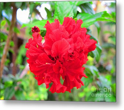 Metal Print featuring the photograph Red Flower by Sergey Lukashin