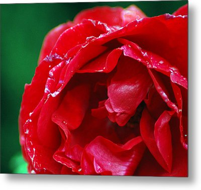 Red Flower Wet Metal Print by Matt Harang