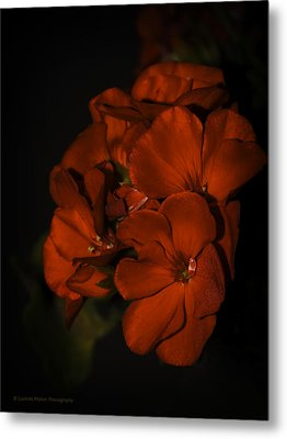 Metal Print featuring the photograph Red Flowers In Evening Light by Lucinda Walter