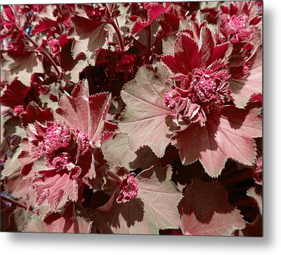 Metal Print featuring the photograph Red Flowers by Laurie Tsemak