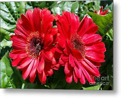 Metal Print featuring the photograph Red Flowers by Rose Wang