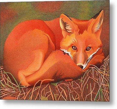 Red Fox Metal Print by Dan Miller