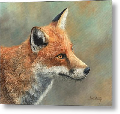 Red Fox Portrait Metal Print by David Stribbling