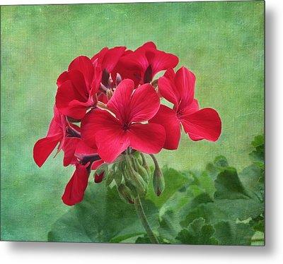 Red Geranium Flowers Metal Print by Kim Hojnacki