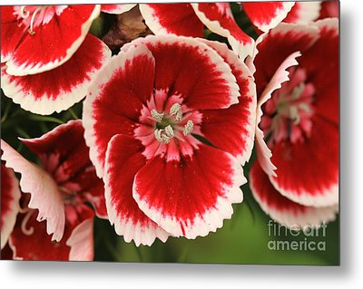 Red Glory All Profits Go To Hospice Of The Calumet Area Metal Print