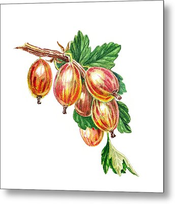 Red Gooseberries Bunch Metal Print by Irina Sztukowski