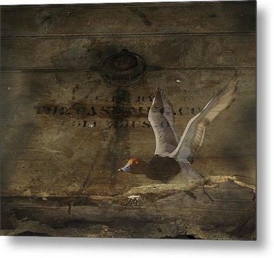 Red Head Duck Old Box Metal Print
