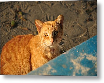Red-head Metal Print