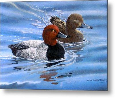 Red Headed Ducks Metal Print by Dan Terry