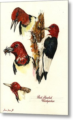 Red Headed Woodpecker Bird Metal Print by Juan  Bosco