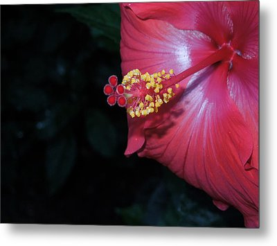 Metal Print featuring the photograph Red Hibiscus by Ron Davidson