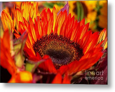 Red Hot  Metal Print by John S