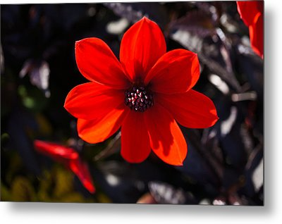 Red II Metal Print by Ronda Broatch