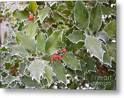 Metal Print featuring the photograph Red In Winter by Felicia Tica
