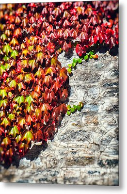 Metal Print featuring the photograph Red Ivy On Wall by Silvia Ganora