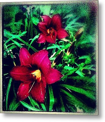 Red Jewels In The Garden Metal Print by Paul Cutright