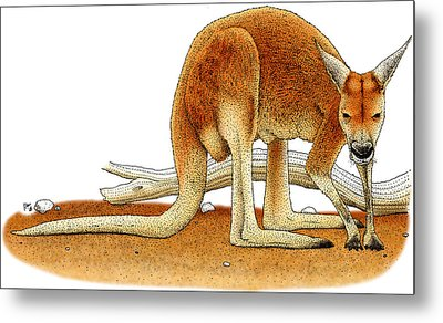 Red Kangaroo Metal Print