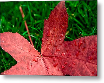 Metal Print featuring the photograph Red Leaf by Crystal Hoeveler