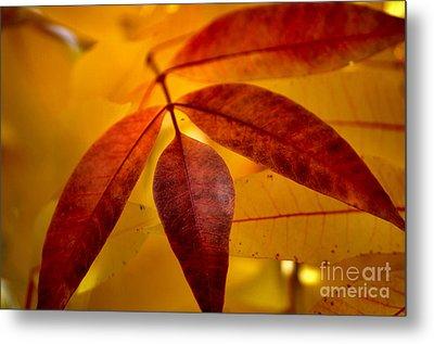 Red Leaves At Dawn Metal Print by Deb Halloran