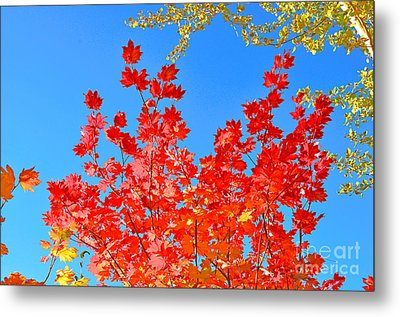 Metal Print featuring the photograph Red Leaves by David Lawson