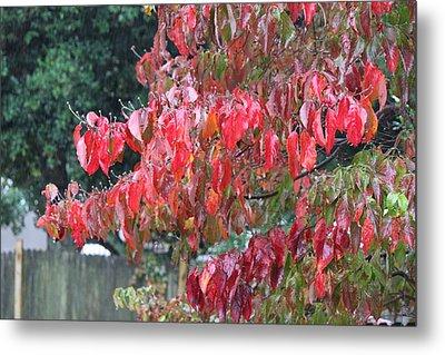 Red Leaves In The Rain Metal Print by Carolyn Ricks