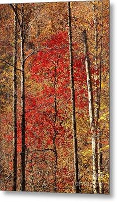 Red Leaves Metal Print by Patrick Shupert