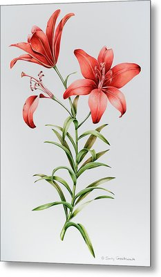 Red Lilies Metal Print by Sally Crosthwaite