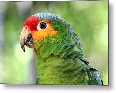 Red-lored Amazon Parrot Metal Print by Teresa Zieba