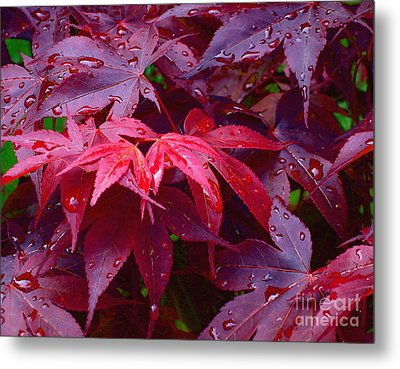 Red Maple After Rain Metal Print by Ann Horn