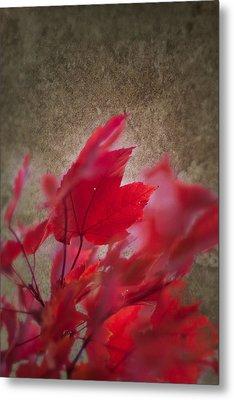 Red Maple Dreams Metal Print