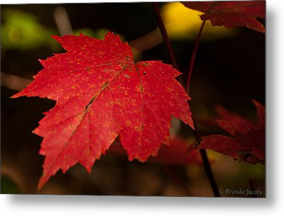Red Maple Leaf In Fall Metal Print