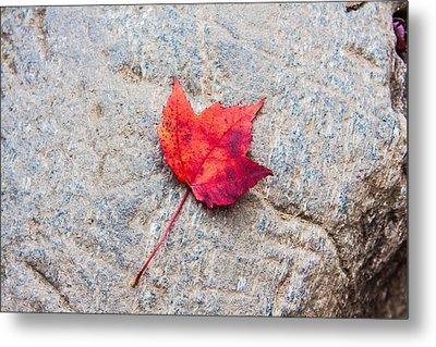 Red Maple Leaf On Granite Stone In Horizontal Format Metal Print by Karen Stephenson