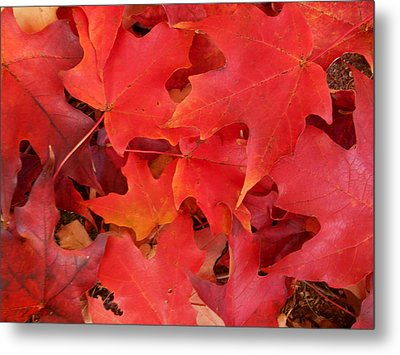 Red Maple Leaves Carpeting The Ground Metal Print by Patricia E Sundik