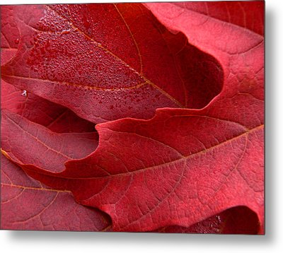 Red Maple Leaves Metal Print by Jennie Marie Schell