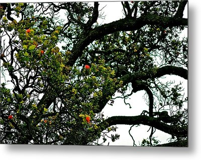 Red Ohia Lehua Tree Metal Print
