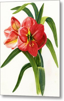 Red-orange Amaryllis Metal Print by Sharon Freeman