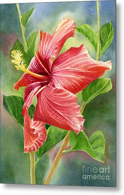Red Orange Hibiscus With Background Metal Print by Sharon Freeman