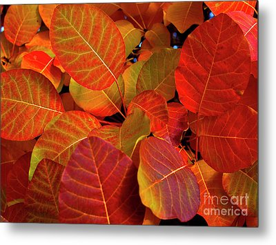 Metal Print featuring the photograph Red Orange Leaves by Charles Lupica