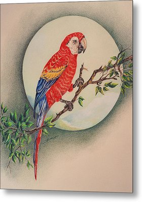 Metal Print featuring the drawing Red Parrot by Ethel Quelland