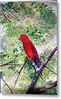 Red Parrot Of Papua Metal Print by Jason Sentuf