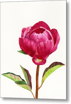 Red Peony With Leaves Metal Print by Sharon Freeman