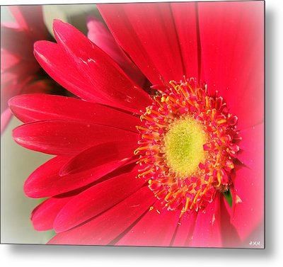Red Petaled Gerbera Metal Print by Heidi Manly