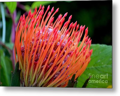 Red Pin Cushion Metal Print by Scott Lyons