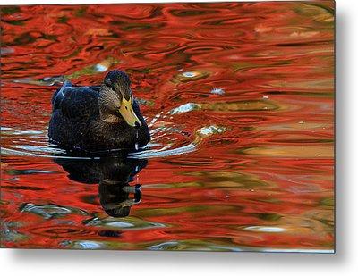 Red Pond Metal Print by Karol Livote