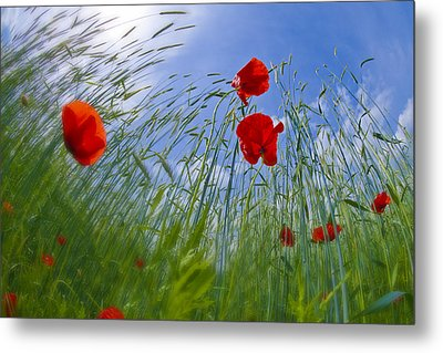 Red Poppies And Blue Sky Metal Print by Melanie Viola