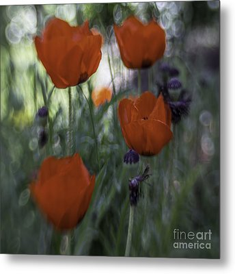 Red Poppies Metal Print by Jean OKeeffe Macro Abundance Art