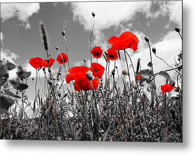 Red Poppies On Black And White Background Metal Print