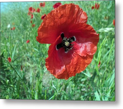 Metal Print featuring the photograph Red Poppy by Vesna Martinjak