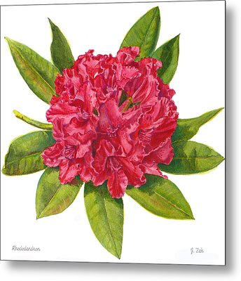 Red Rhododendron  Metal Print